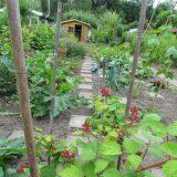 opgeknapte tuin